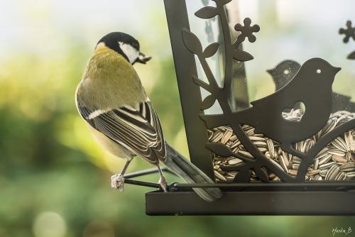 Fågel vid fågelbordet